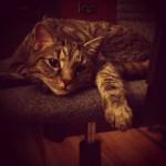 Chester Chair Thief