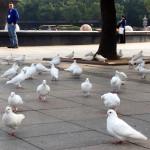 Randy Ponders Birds