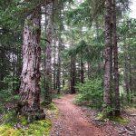 Dyea Trail