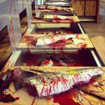 Salmon Filleting Process