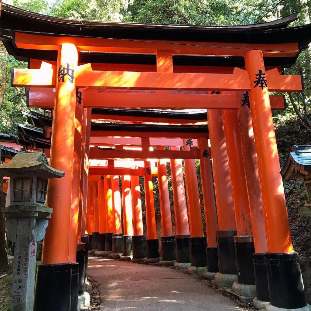Fushimi Inari - Sunlit Torii