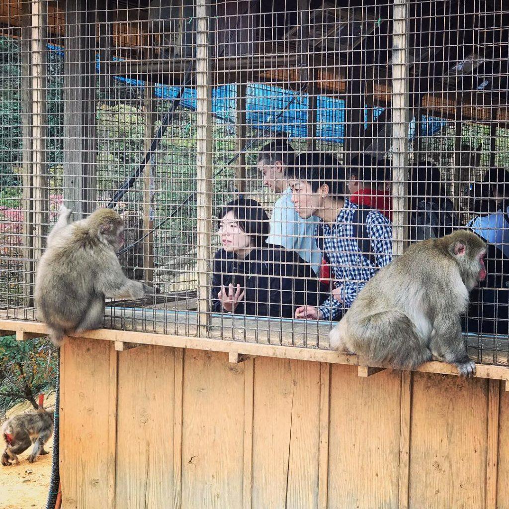 Iwatayama Monkey Park - Viewing Porch