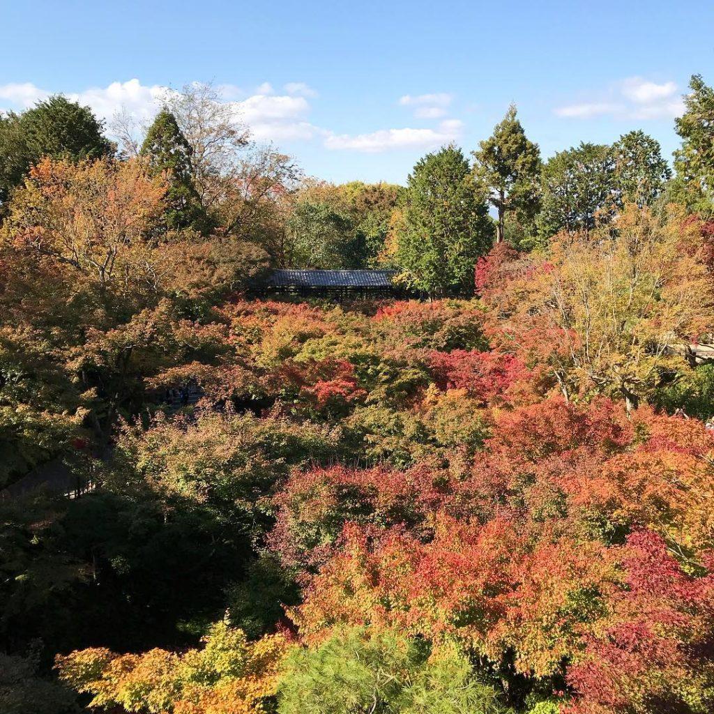 Tofuku-ji - Autumn Leaves