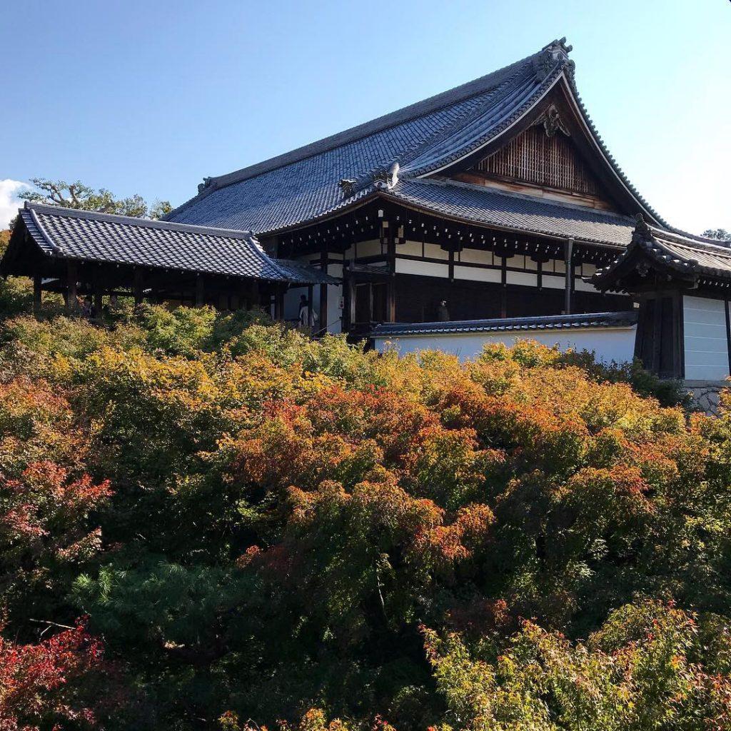 Tofuku-ji - Roof Amid Foliage